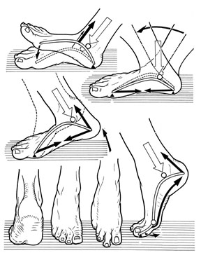 Il ruolo meccanico e simbolico del piede